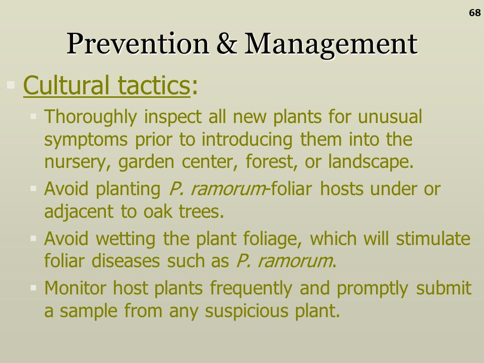 Prevention & Management Cultural tactics: Thoroughly inspect all new plants for unusual symptoms prior to introducing them into the nursery, garden ce