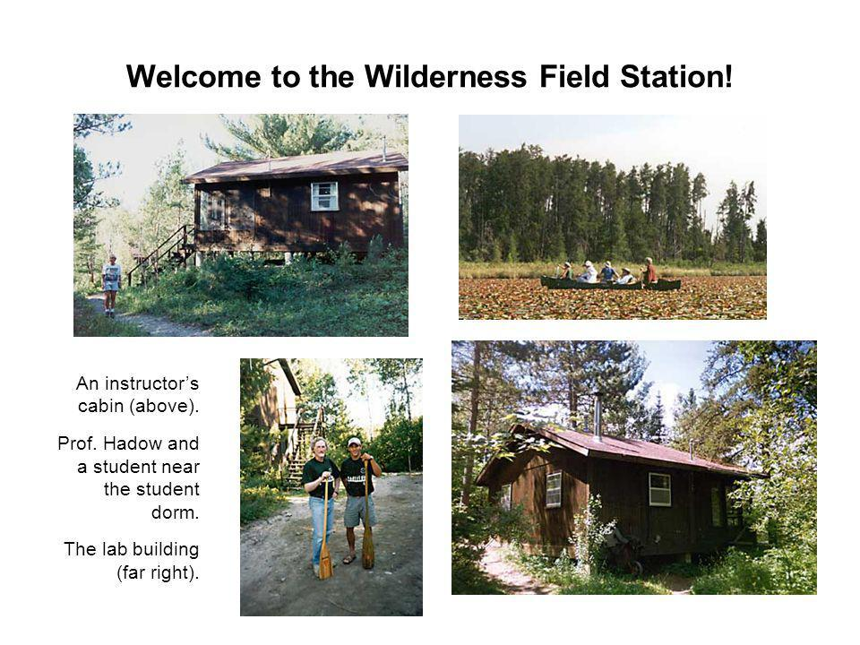 Welcome to the Wilderness Field Station.An instructors cabin (above).