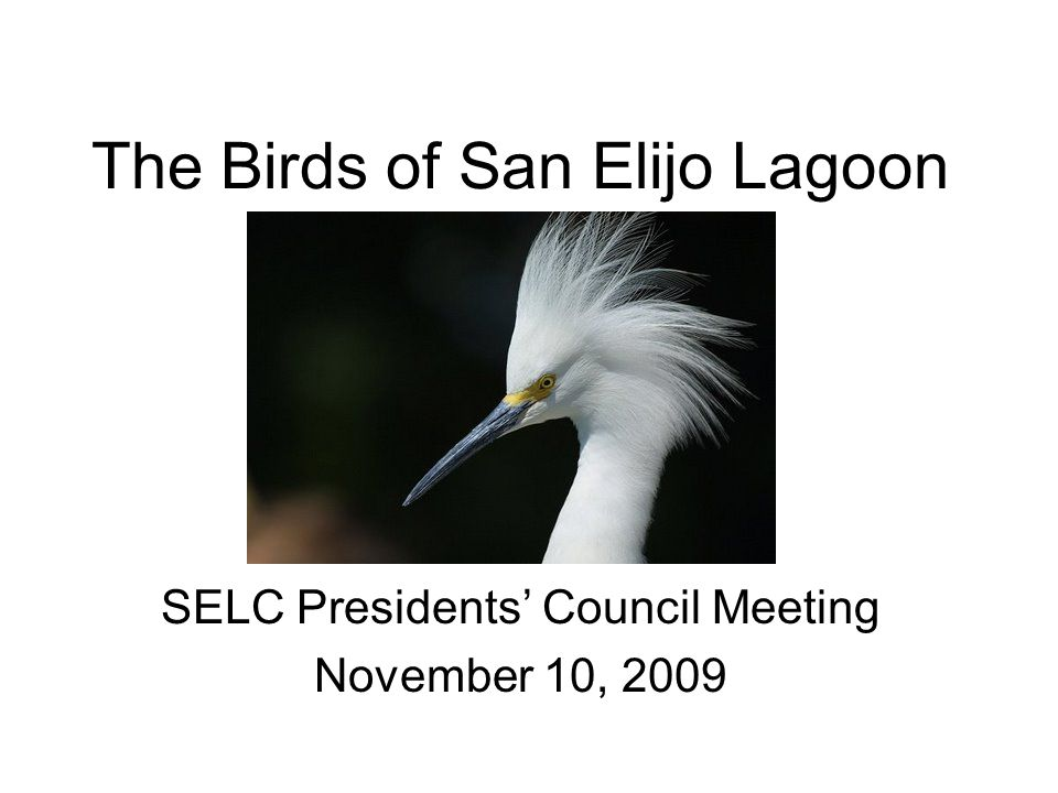The Birds of San Elijo Lagoon SELC Presidents Council Meeting November 10, 2009