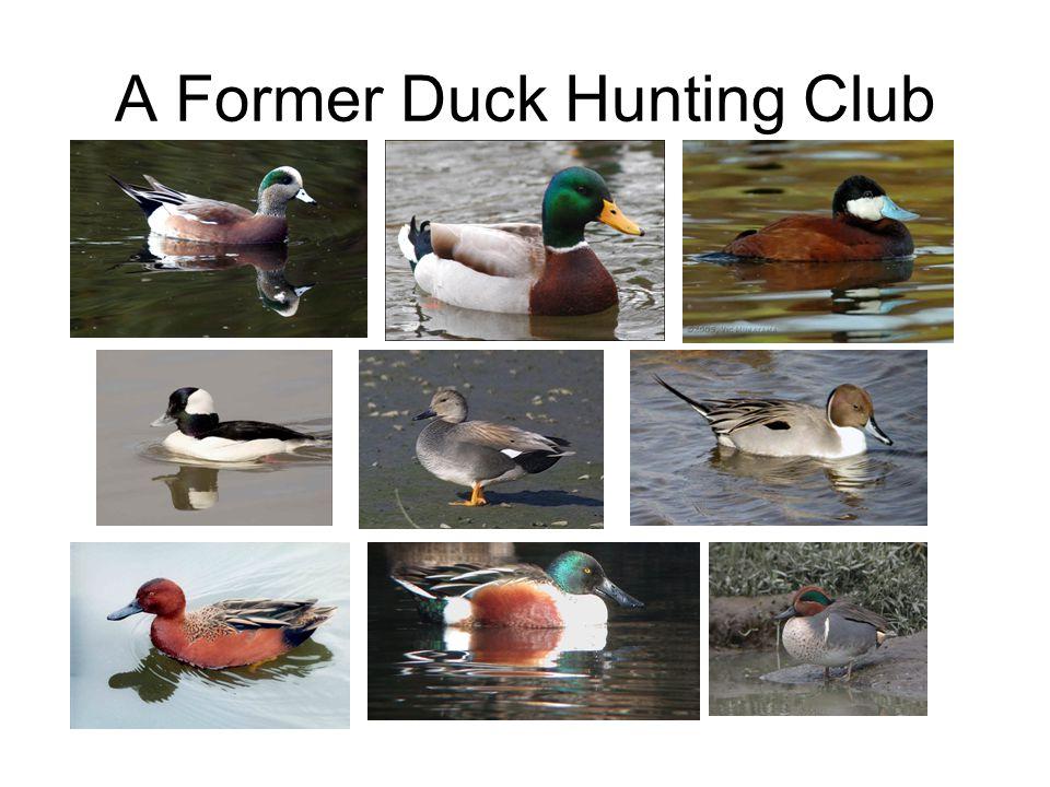 A Former Duck Hunting Club