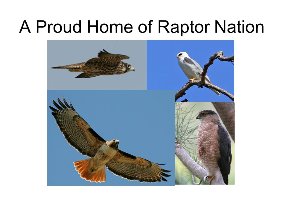 A Proud Home of Raptor Nation