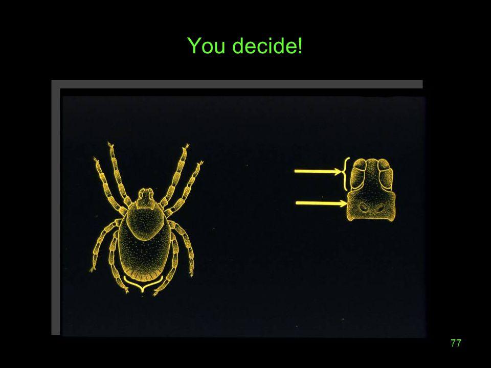 77 You decide!