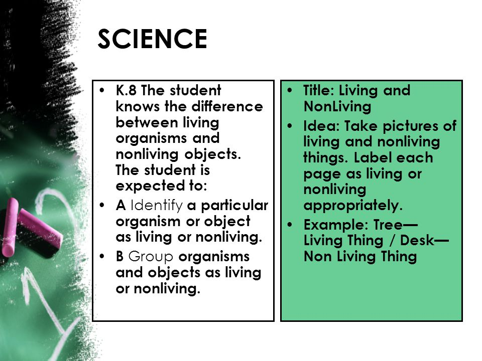 K.8 The student knows the difference between living organisms and nonliving objects. The student is expected to: A Identify a particular organism or o