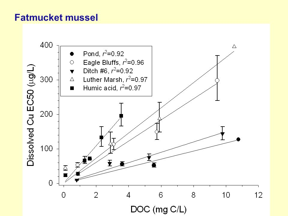 Fatmucket mussel