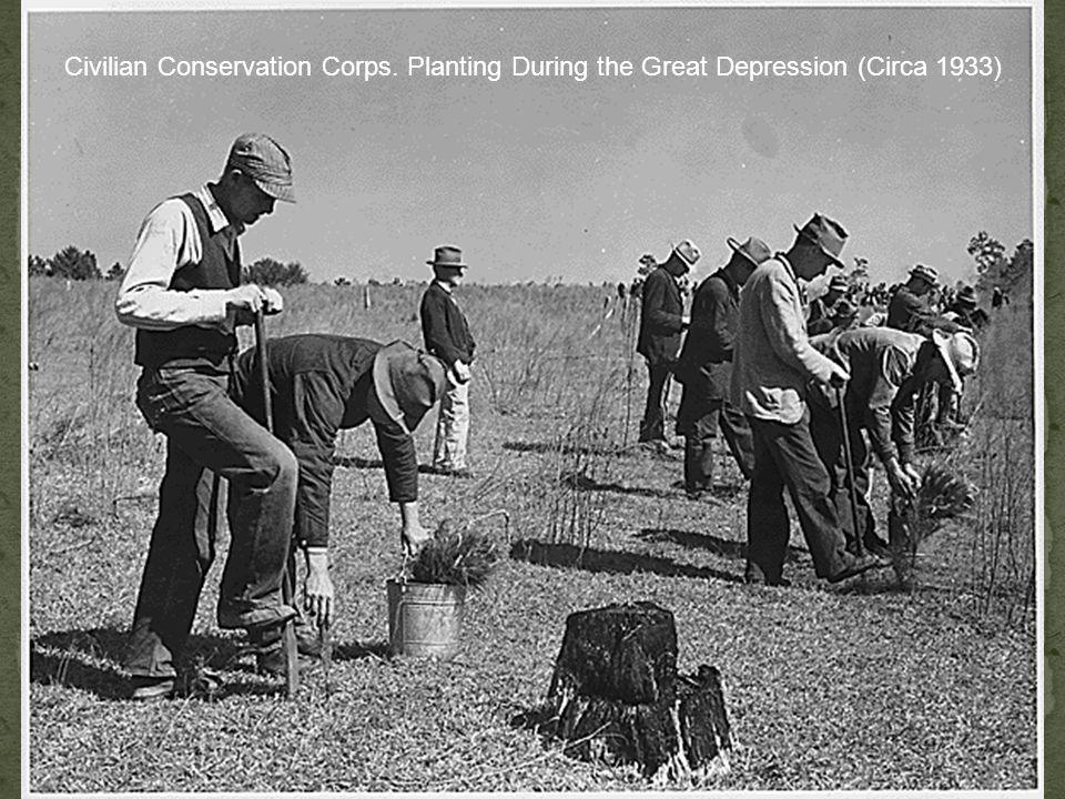 Civilian Conservation Corps. Planting During the Great Depression (Circa 1933)