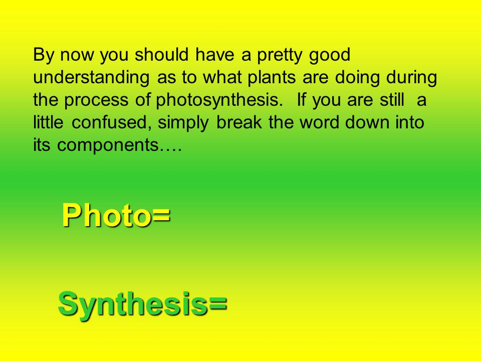 By now you should have a pretty good understanding as to what plants are doing during the process of photosynthesis.