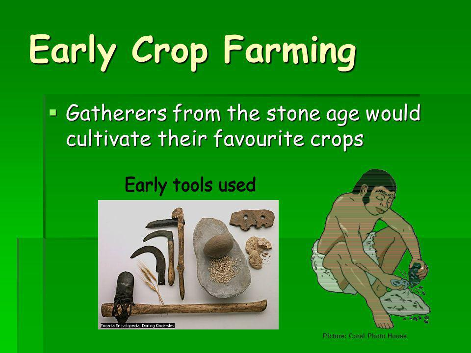 Early Crop Farming Gatherers from the stone age would cultivate their favourite crops Gatherers from the stone age would cultivate their favourite crops Picture: Corel Photo House