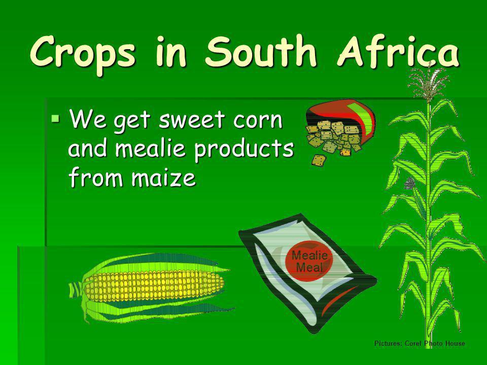 Do we need farmers.