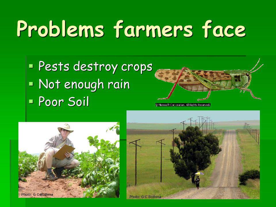 Problems farmers face Pests destroy crops Pests destroy crops Not enough rain Not enough rain Poor Soil Poor Soil Photo: G C Bothma