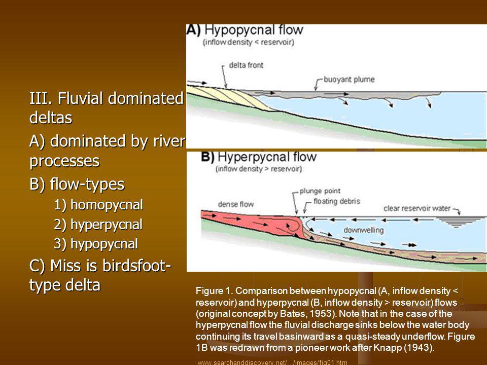 III. Fluvial dominated deltas A) dominated by river processes B) flow-types 1) homopycnal 2) hyperpycnal 3) hypopycnal C) Miss is birdsfoot- type delt