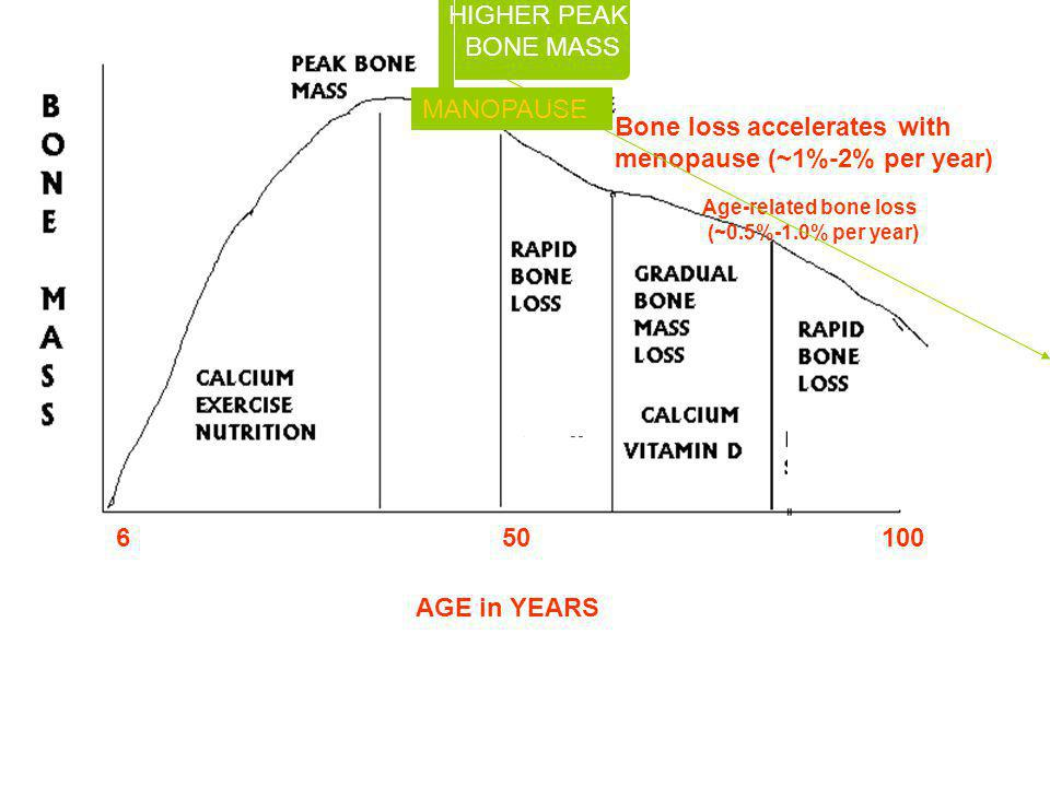 Bone loss accelerates with menopause (~1%-2% per year) Age-related bone loss (~0.5%-1.0% per year) 6 50 100 AGE in YEARS HIGHER PEAK BONE MASS MANOPAU