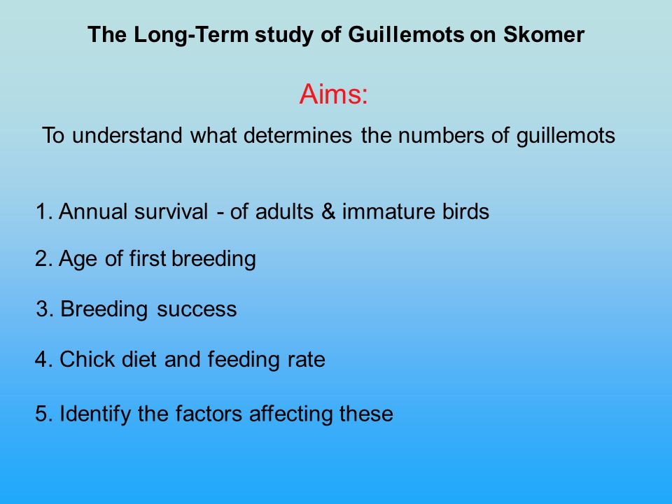 The Long-Term study of Guillemots on Skomer To understand what determines the numbers of guillemots Aims: 1.