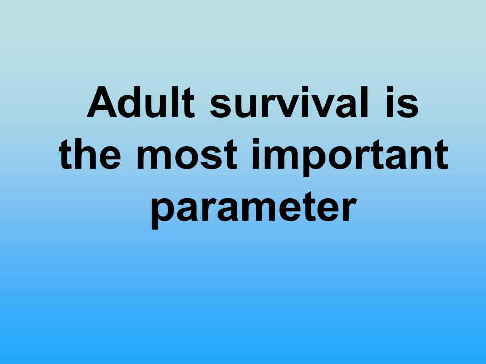 Adult survival is the most important parameter