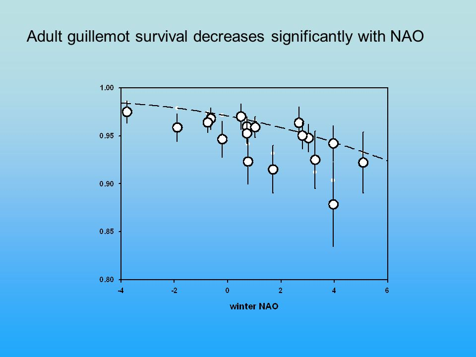 Adult guillemot survival decreases significantly with NAO
