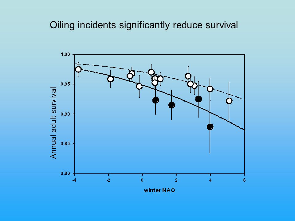Annual adult survival Oiling incidents significantly reduce survival