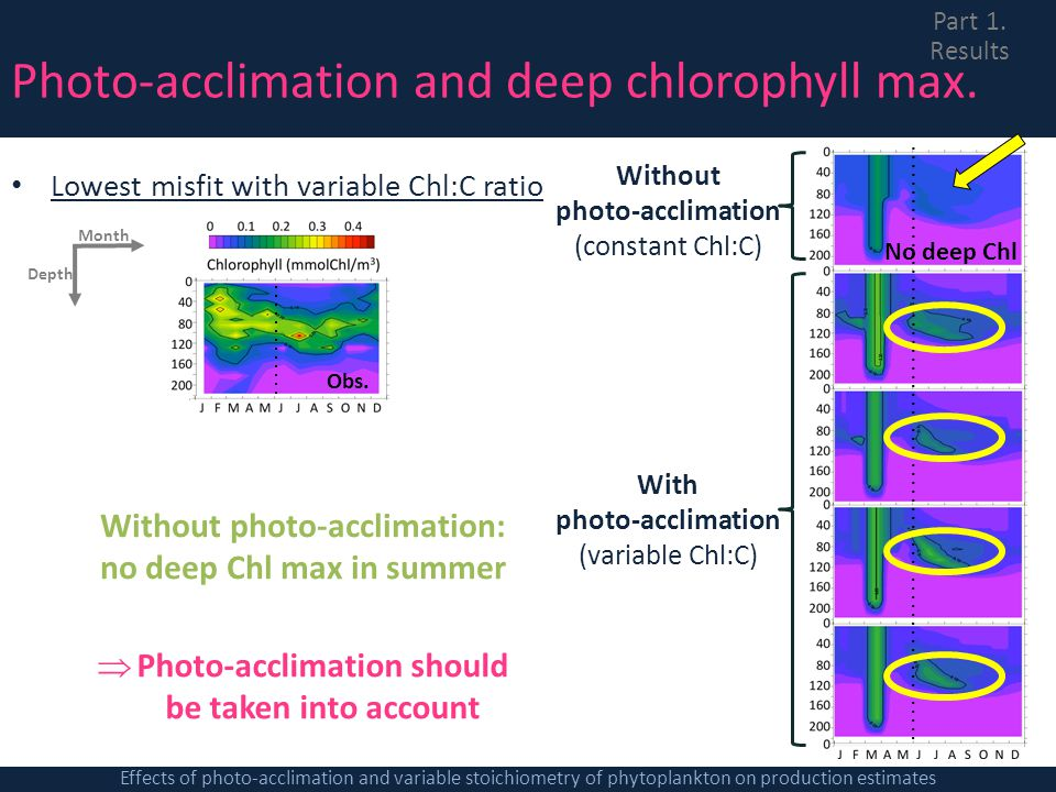 Photo-acclimation and deep chlorophyll max. Lowest misfit with variable Chl:C ratio Without photo-acclimation: no deep Chl max in summer Photo-acclima