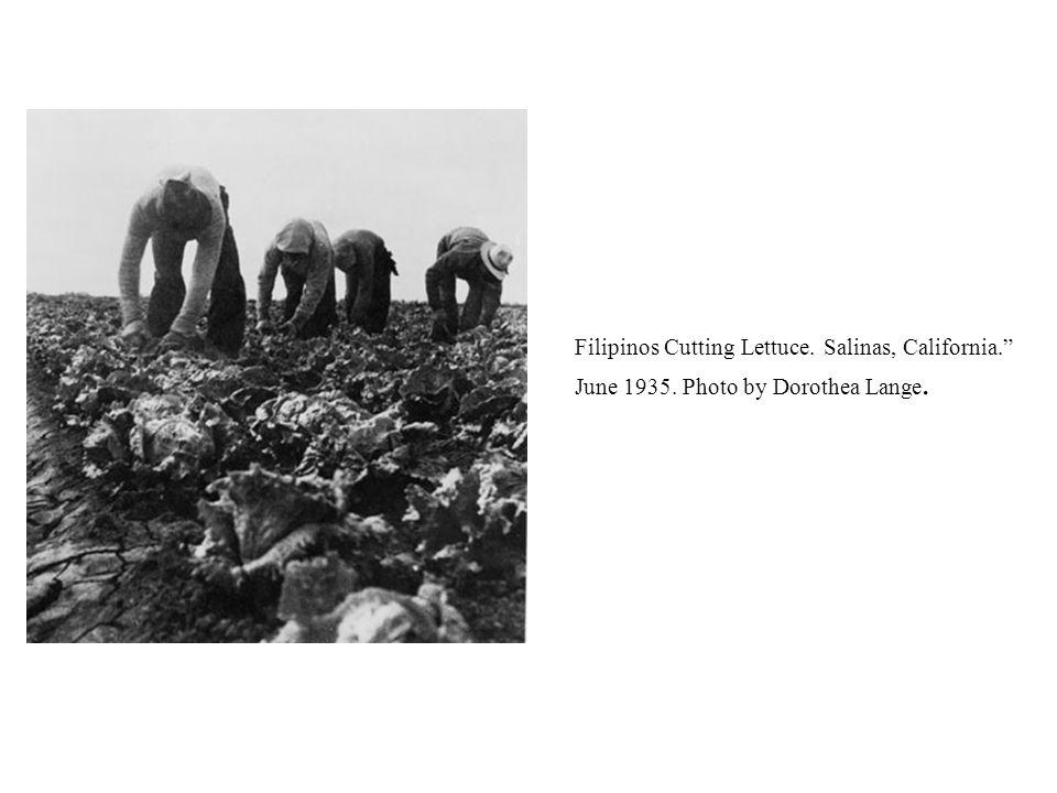 Filipinos Cutting Lettuce. Salinas, California. June 1935. Photo by Dorothea Lange.