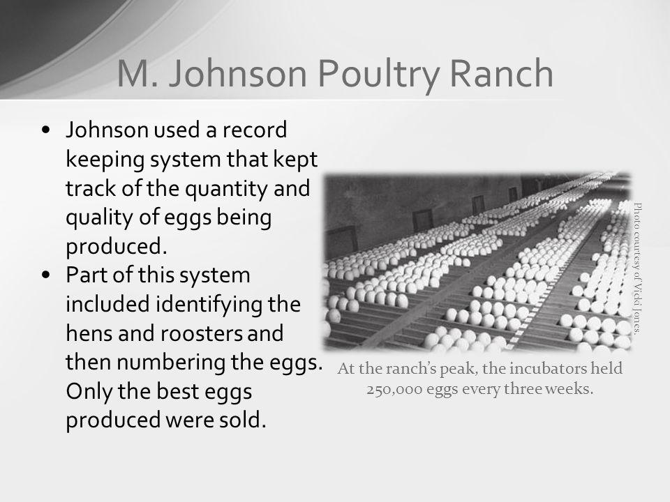 M. Johnson Poultry Ranch Johnson used a record keeping system that kept track of the quantity and quality of eggs being produced. Part of this system