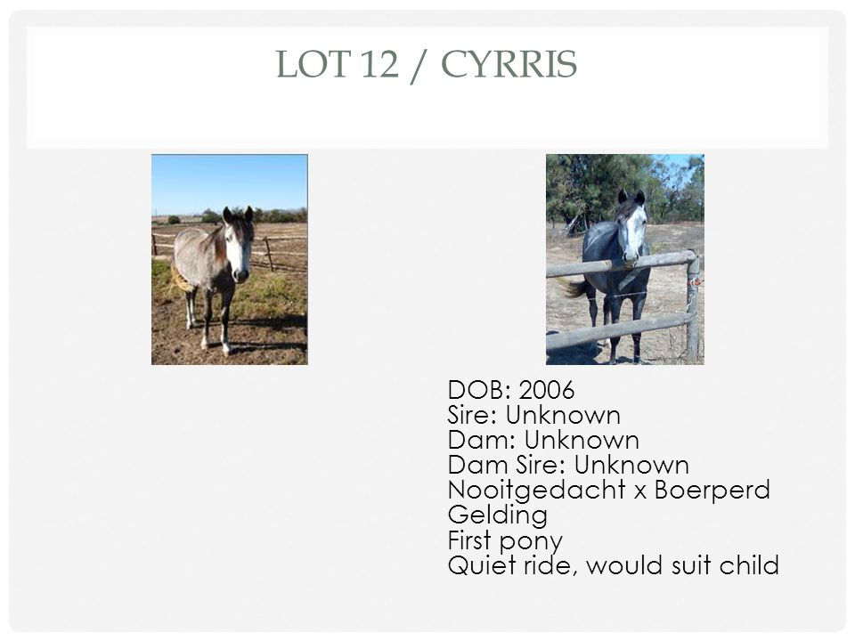 LOT 11 / CELTIC MIST DOB: 1996 Sire: Jallad Dam: Lilly Lane Dam Sire: Unknown 164cm TB Gelding Dressage, Hacking Rock steady, great for nervous rider