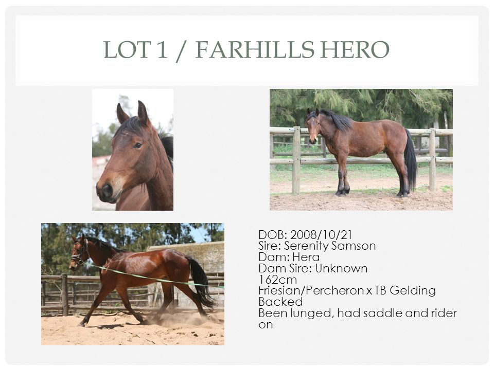 BY D. NEWMAN & P. ROODMAN WESTERN CAPE SPORT HORSE AUCTION