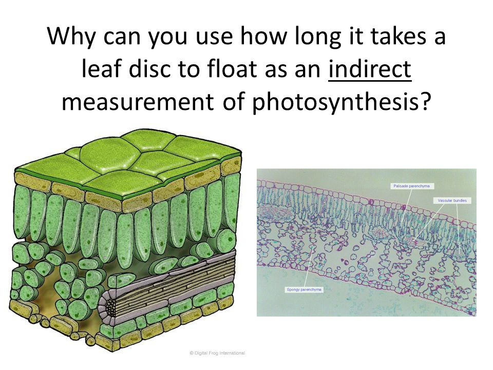 Why can you use how long it takes a leaf disc to float as an indirect measurement of photosynthesis?