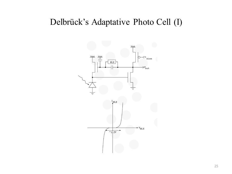 Delbrücks Adaptative Photo Cell (I) 25