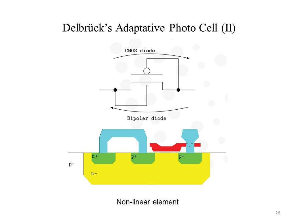 Delbrücks Adaptative Photo Cell (II) Non-linear element 26