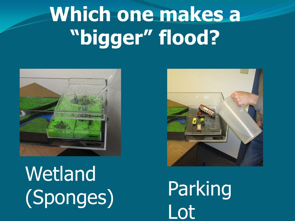 Which one makes a bigger flood? Wetland (Sponges) Parking Lot