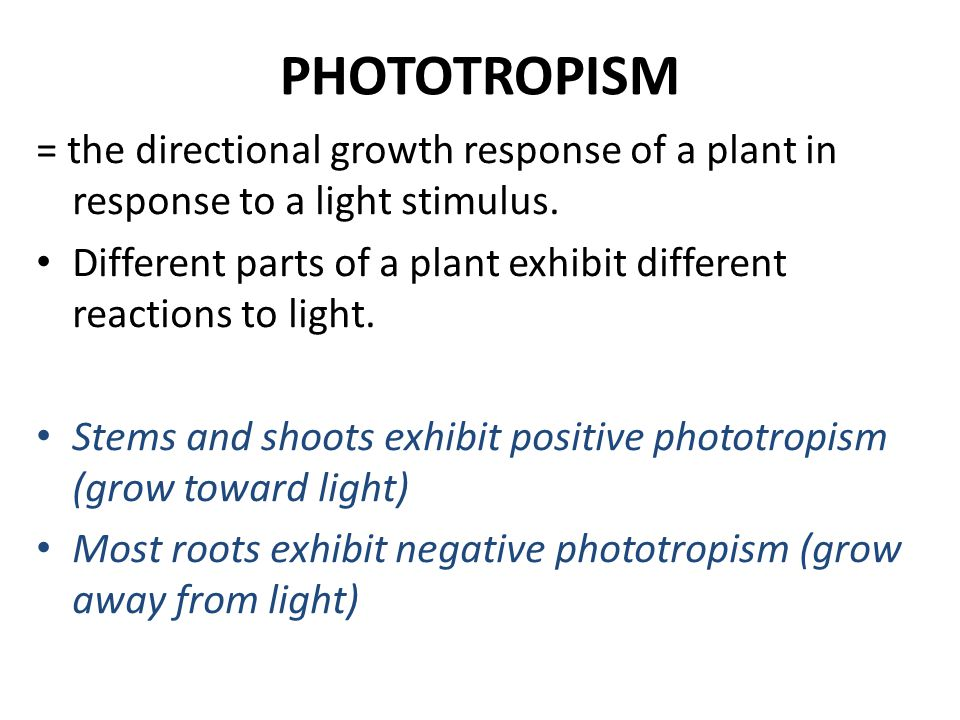 PHOTOTROPISM = the directional growth response of a plant in response to a light stimulus. Different parts of a plant exhibit different reactions to l