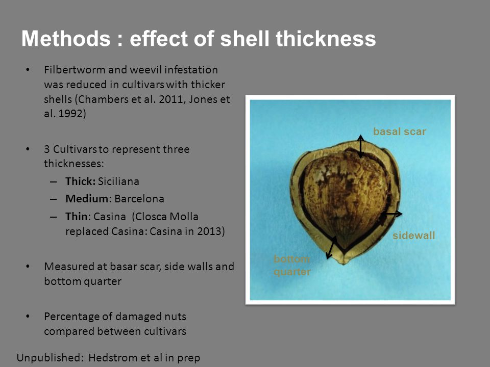 Methods : effect of shell thickness Filbertworm and weevil infestation was reduced in cultivars with thicker shells (Chambers et al.