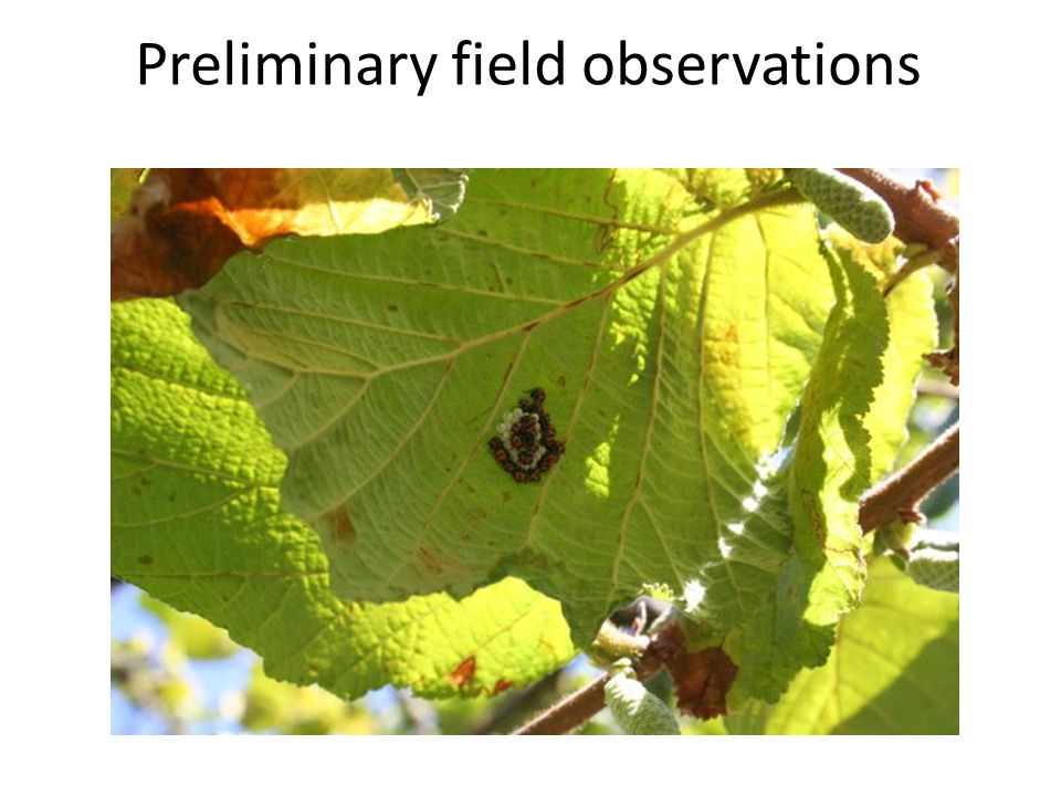 Preliminary field observations