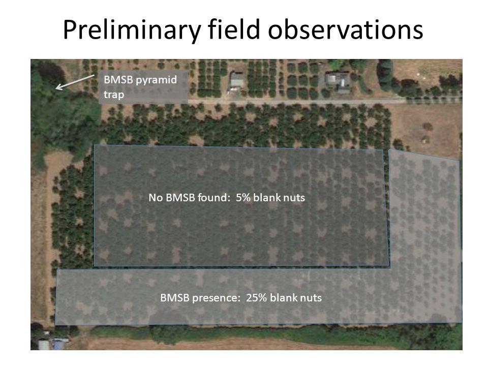 No BMSB found: 5% blank nuts BMSB presence: 25% blank nuts BMSB pyramid trap