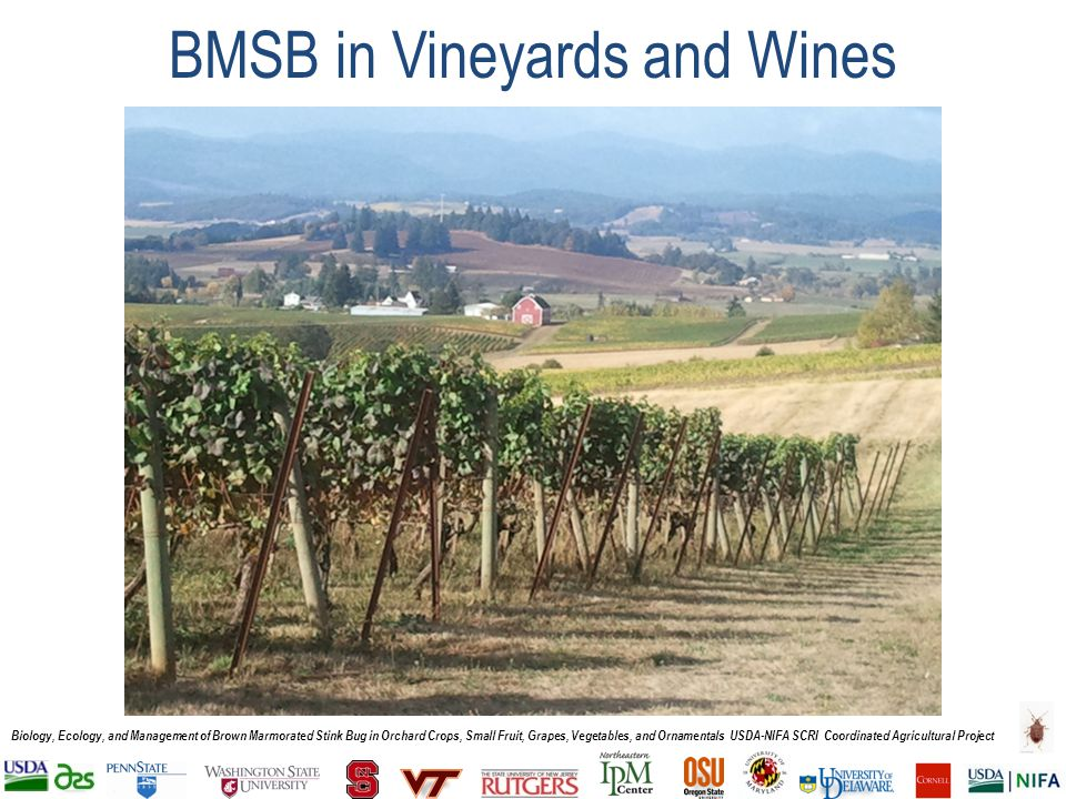 Biology, Ecology, and Management of Brown Marmorated Stink Bug in Orchard Crops, Small Fruit, Grapes, Vegetables, and Ornamentals USDA-NIFA SCRI Coordinated Agricultural Project BMSB in Vineyards and Wines