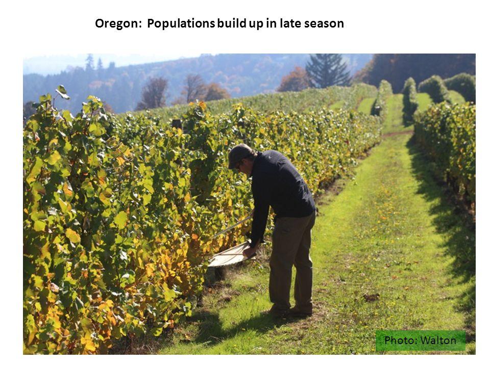Photo: Walton Oregon: Populations build up in late season