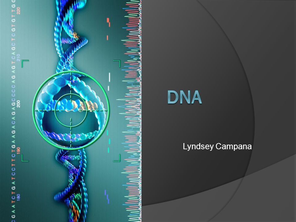 Lyndsey Campana