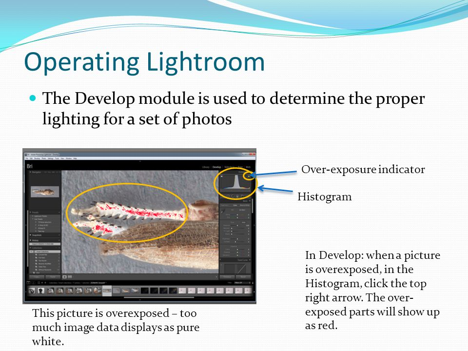 Operating Lightroom The Develop module is used to determine the proper lighting for a set of photos This picture is overexposed – too much image data displays as pure white.