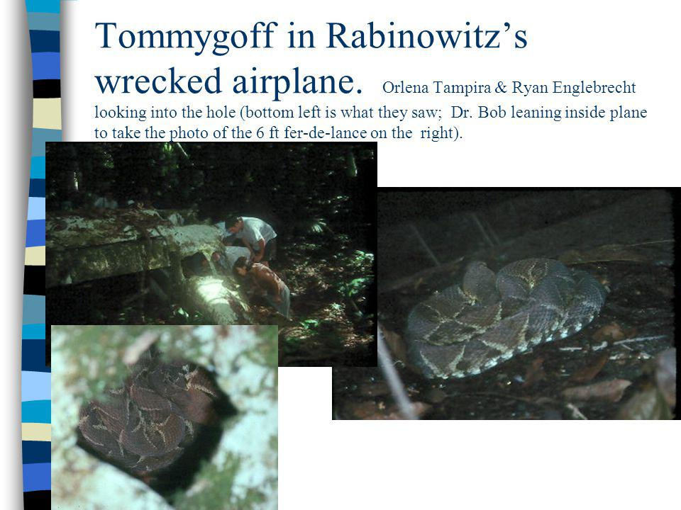 Tommygoff in Rabinowitzs wrecked airplane. Orlena Tampira & Ryan Englebrecht looking into the hole (bottom left is what they saw; Dr. Bob leaning insi