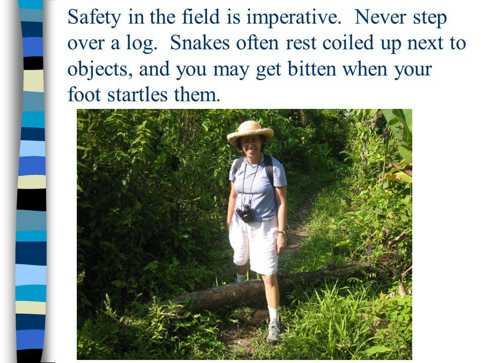 Safety in the field is imperative. Never step over a log. Snakes often rest coiled up next to objects, and you may get bitten when your foot startles