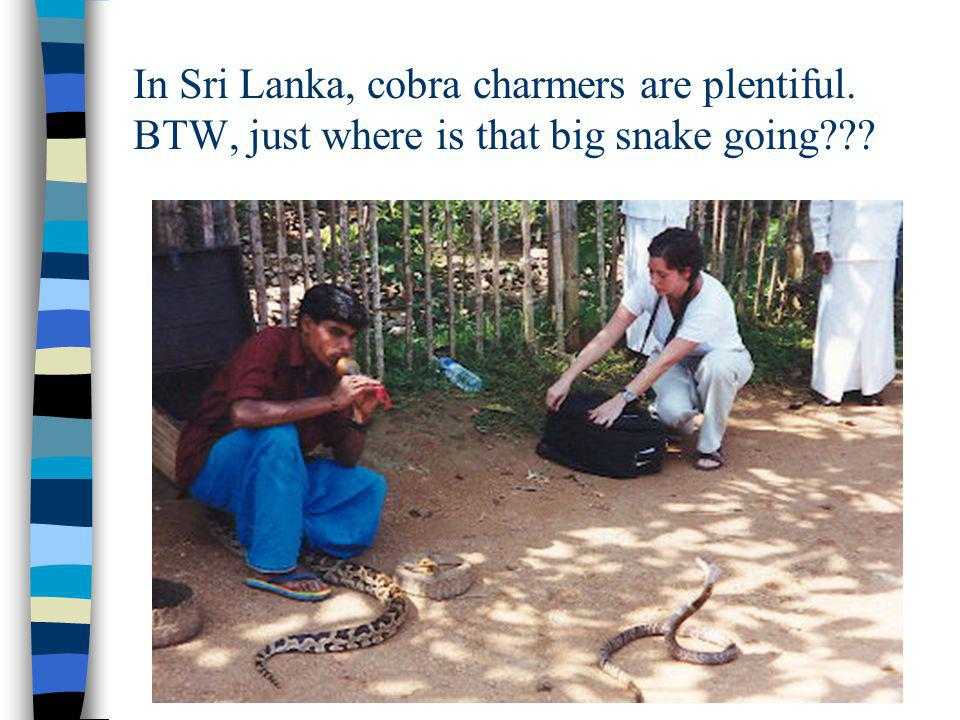 In Sri Lanka, cobra charmers are plentiful. BTW, just where is that big snake going???