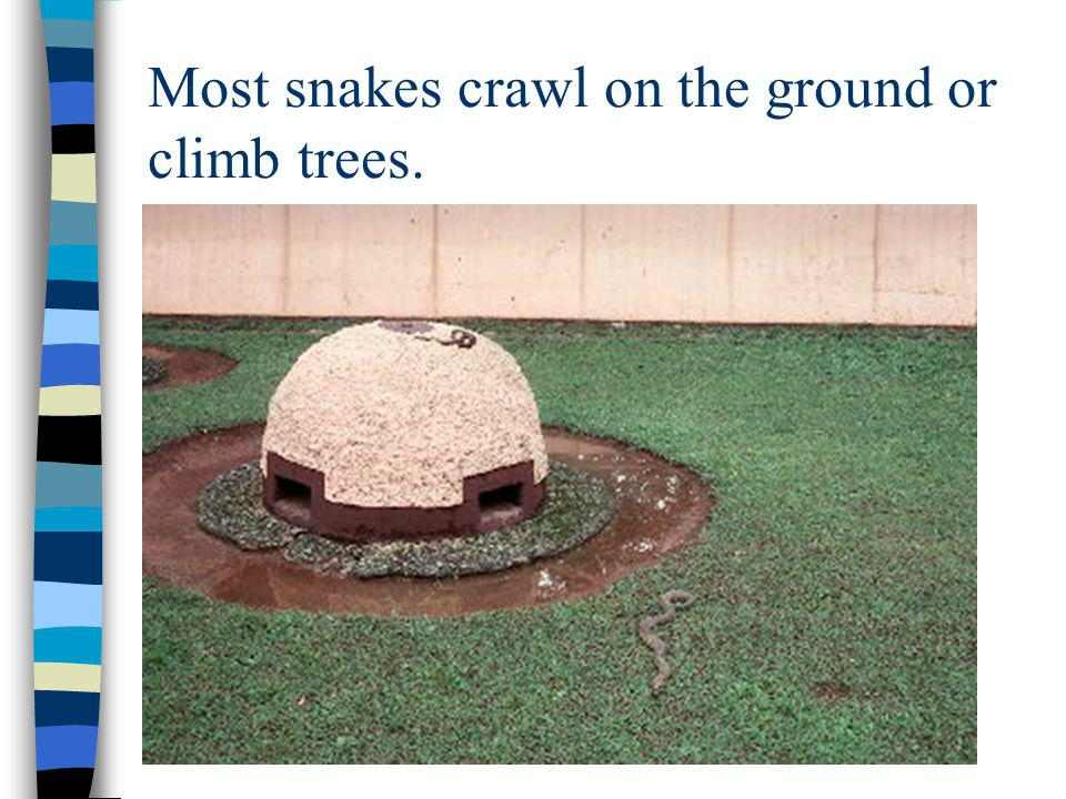 Most snakes crawl on the ground or climb trees.