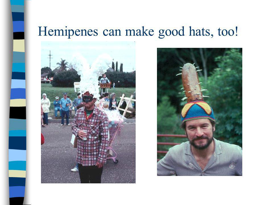 Hemipenes can make good hats, too!