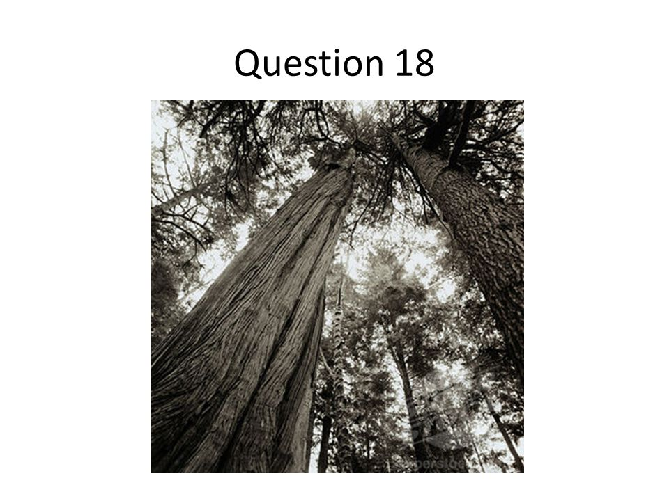 Question 18