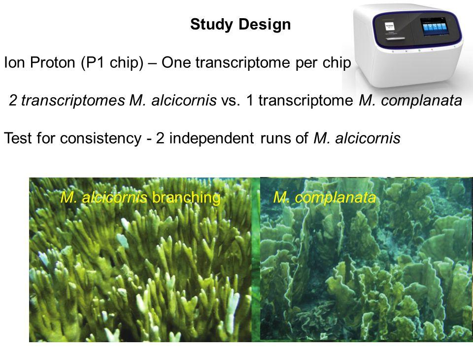 Study Design M. alcicornis branchingM.