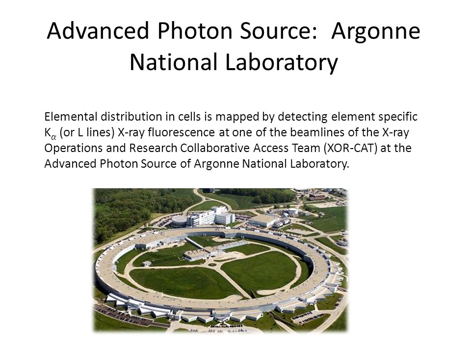 Advanced Photon Source: Argonne National Laboratory Elemental distribution in cells is mapped by detecting element specific K (or L lines) X-ray fluorescence at one of the beamlines of the X-ray Operations and Research Collaborative Access Team (XOR-CAT) at the Advanced Photon Source of Argonne National Laboratory.