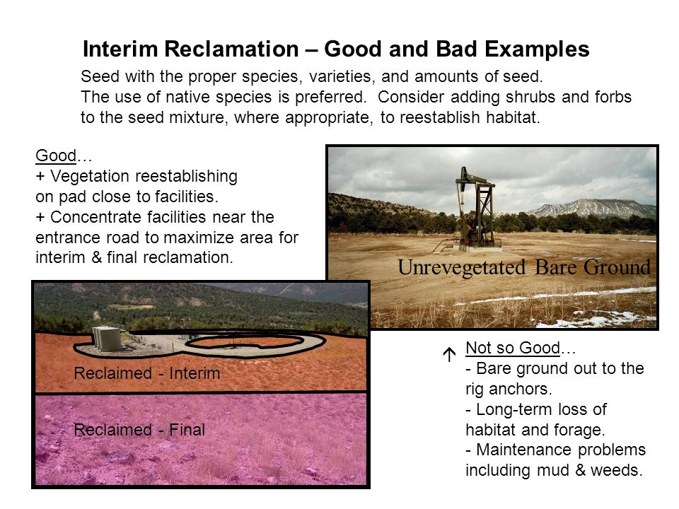 Interim Reclamation – Good and Bad Examples Good… + Vegetation reestablishing on pad close to facilities. + Concentrate facilities near the entrance r