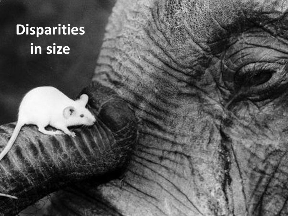 Disparities in size