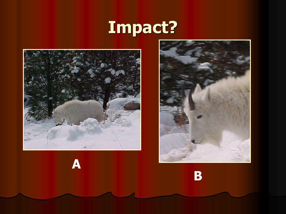 Impact A B