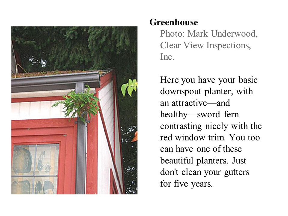 Greenhouse Photo: Mark Underwood, Clear View Inspections, Inc. Here you have your basic downspout planter, with an attractiveand healthysword fern con