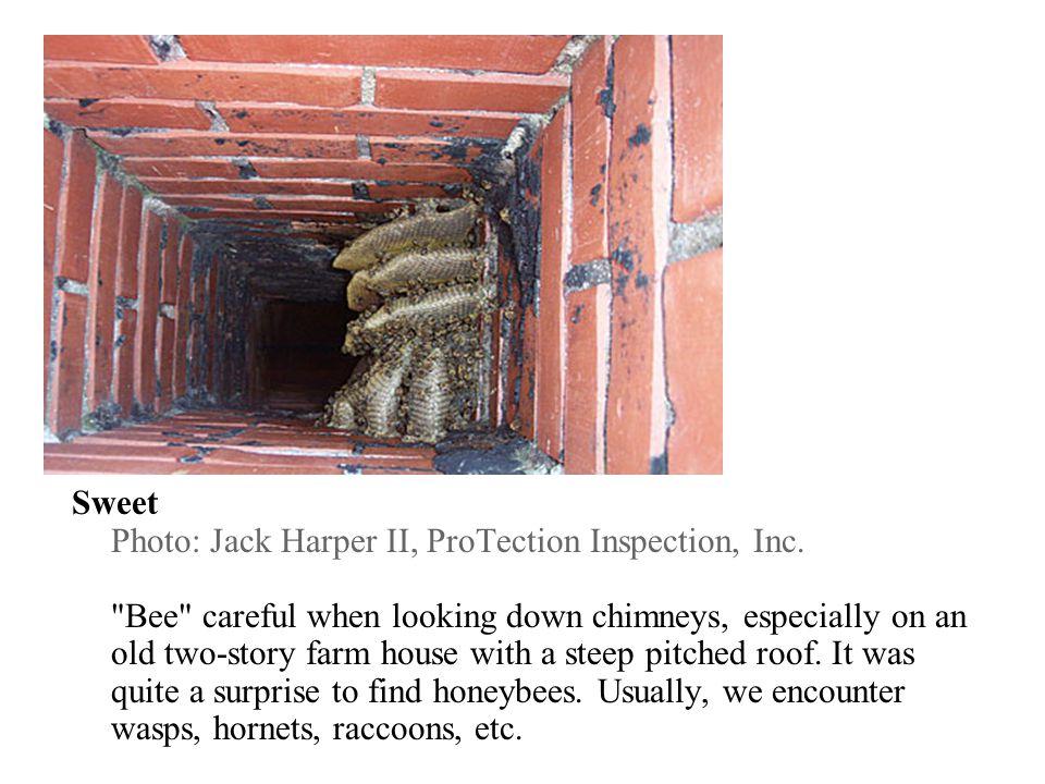 Cornered Photo: Chris Wunderler, Tru-Blu Home Inspections, St.