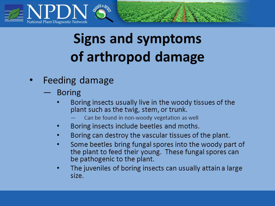 Signs and symptoms of arthropod damage Feeding damage Boring Boring insects usually live in the woody tissues of the plant such as the twig, stem, or